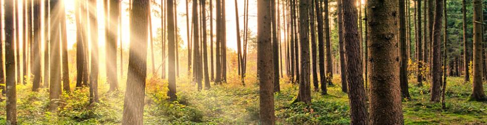 Slide - Sätter Värde På Skogen