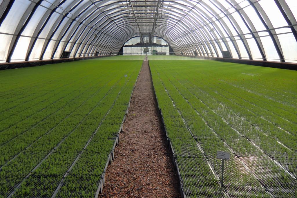 Granplantor - Plantskolan i Hallsberg